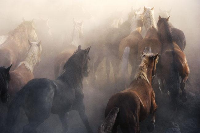 Mustangs – Warm
