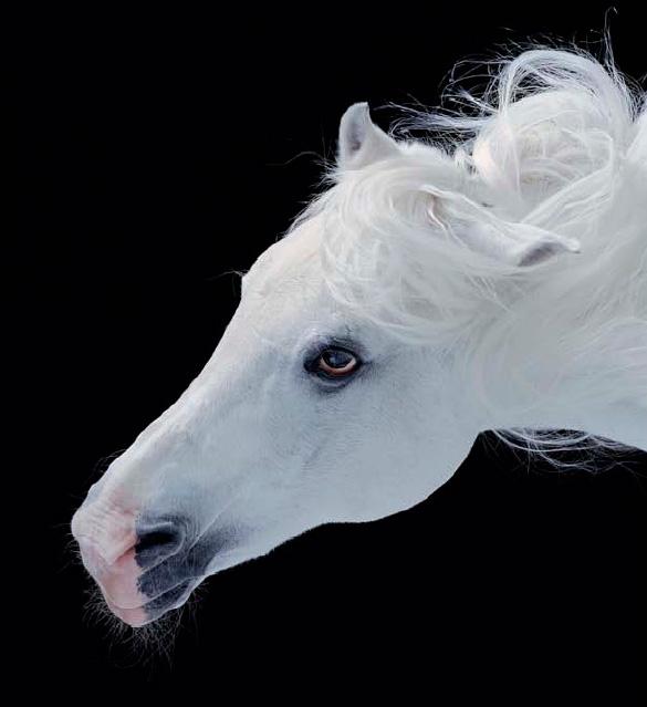 Horse Curly Mane