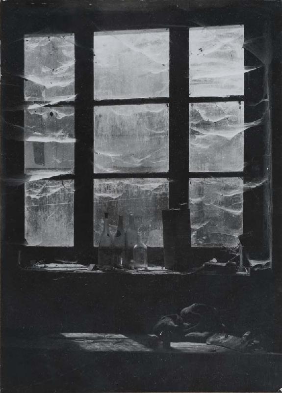 Window in Catus, France