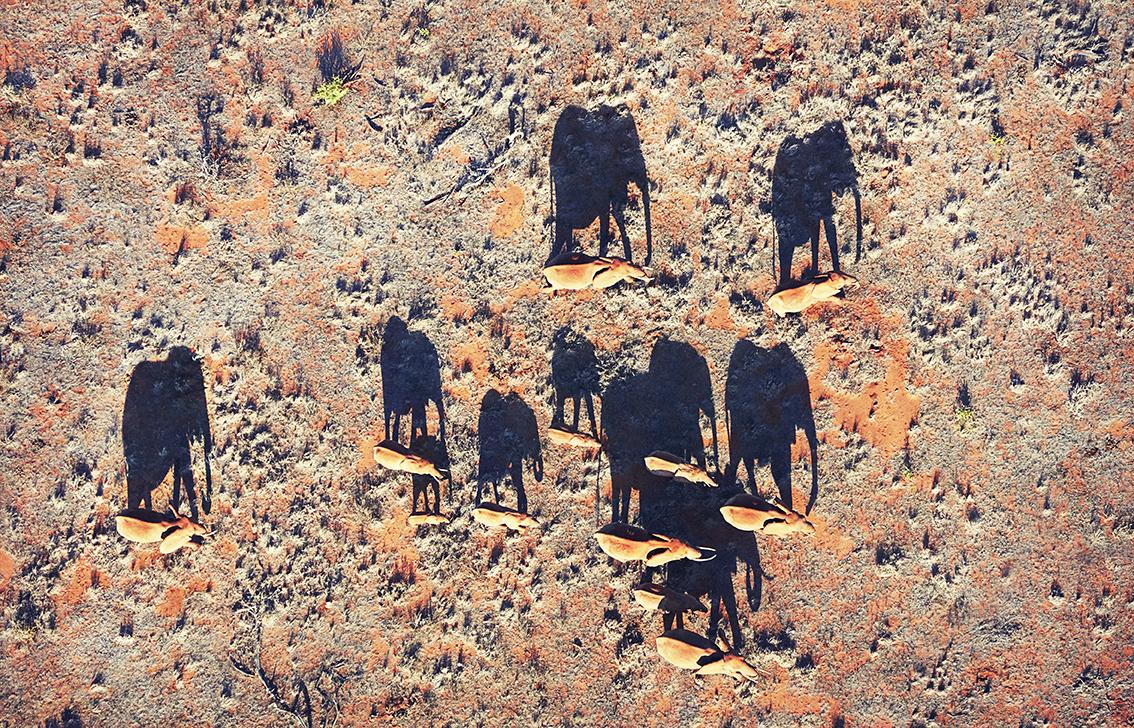 Elephant Shadows