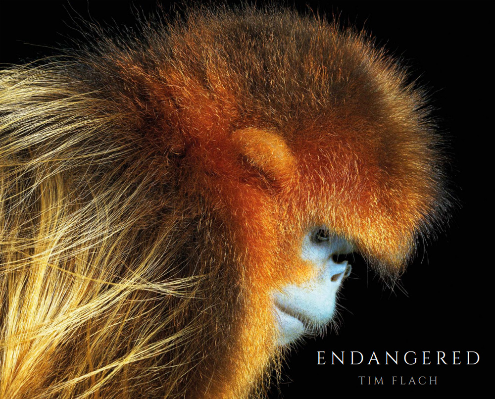 Tim Flach: Endangered Catalogue 2017