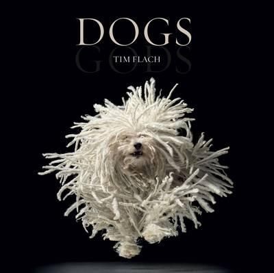 Tim Flach: Dogs Gods
