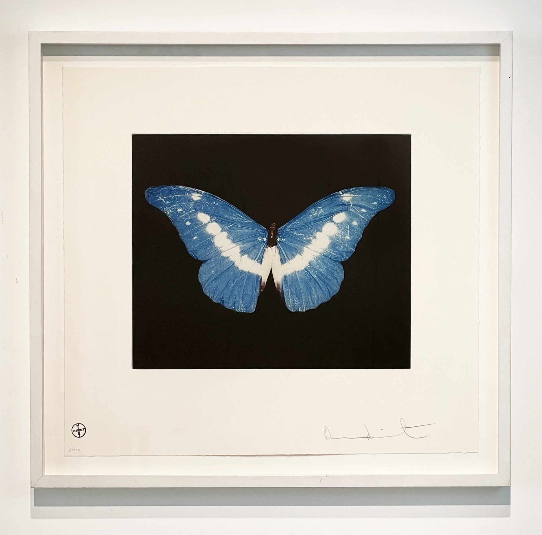 To Begin (Blue/ White Butterfly)