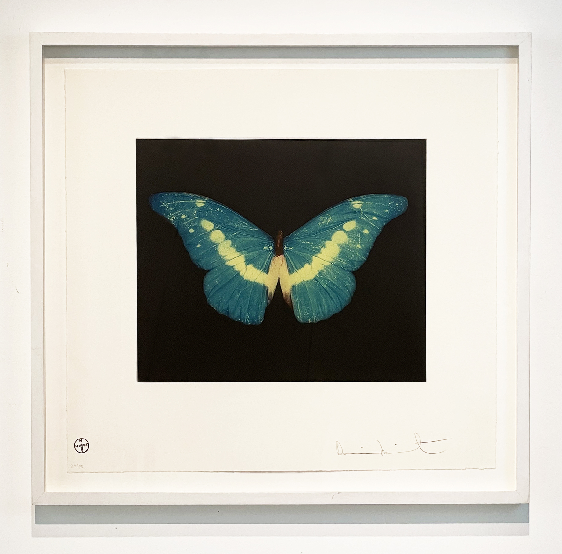 To Belie (Blue/Green/White Butterfly)